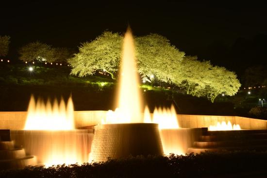 西山公園 桜ライトアップ