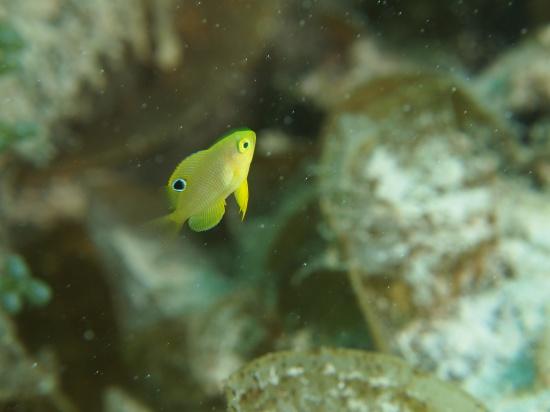 石垣島 ダイビング マクロ