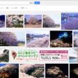 福井 桜 ライトアップで検索