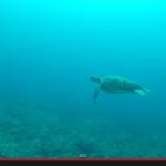 久米島での空撮動画とダイビング動画をYouTubeにアップしました